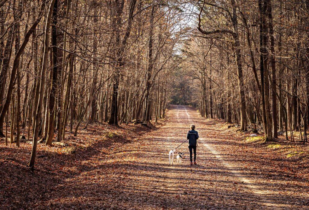 Woman Dog Walk, How to maintain social health